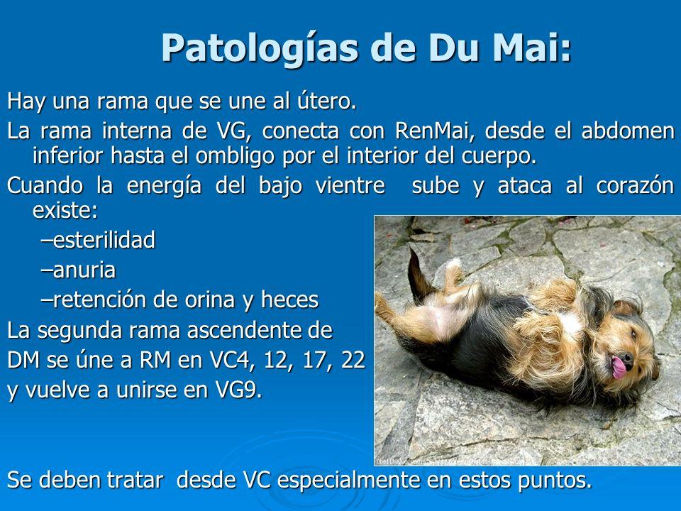Patologías de Du Mai: Hay una rama que se une al útero. La rama interna de VG, conecta con RenMai, desde el abdomen inferior hasta el ombligo por el i