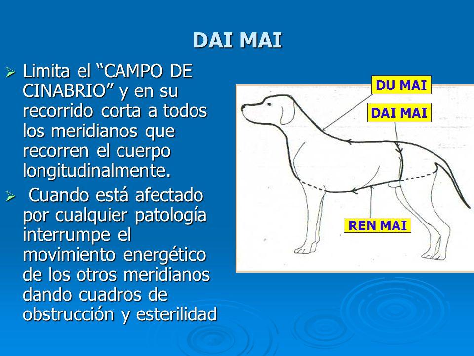 DAI MAI Limita el CAMPO DE CINABRIO y en su recorrido corta a todos los meridianos que recorren el cuerpo longitudinalmente. Limita el CAMPO DE CINABR