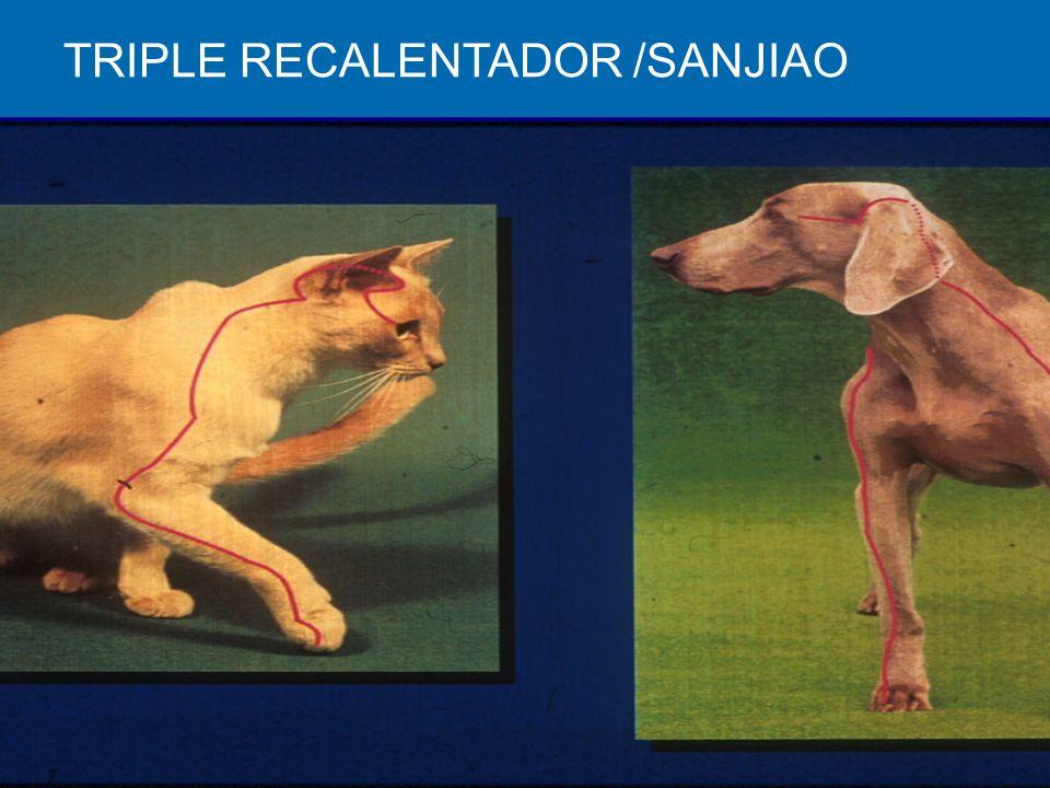 TRIPLE RECALENTADOR /SANJIAO