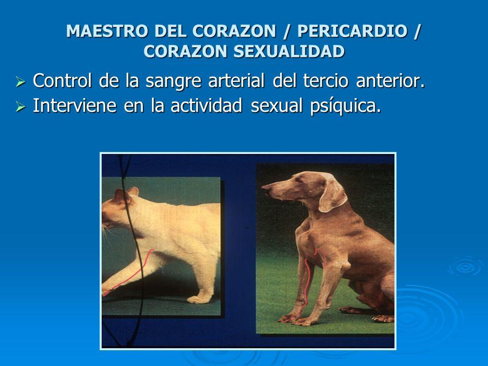 MAESTRO DEL CORAZON / PERICARDIO / CORAZON SEXUALIDAD Control de la sangre arterial del tercio anterior. Control de la sangre arterial del tercio ante