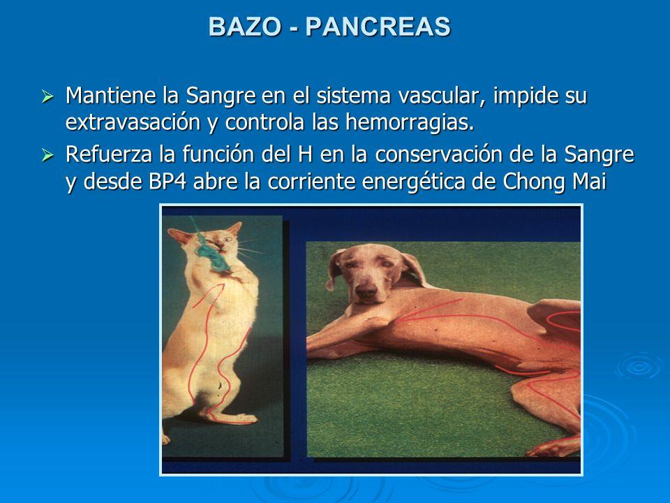 BAZO - PANCREAS Mantiene la Sangre en el sistema vascular, impide su extravasación y controla las hemorragias. Mantiene la Sangre en el sistema vascul