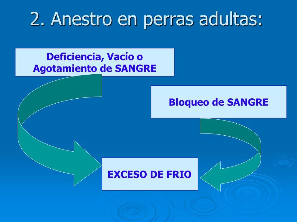 2. Anestro en perras adultas: EXCESO DE FRIO Deficiencia, Vacío o Agotamiento de SANGRE Bloqueo de SANGRE
