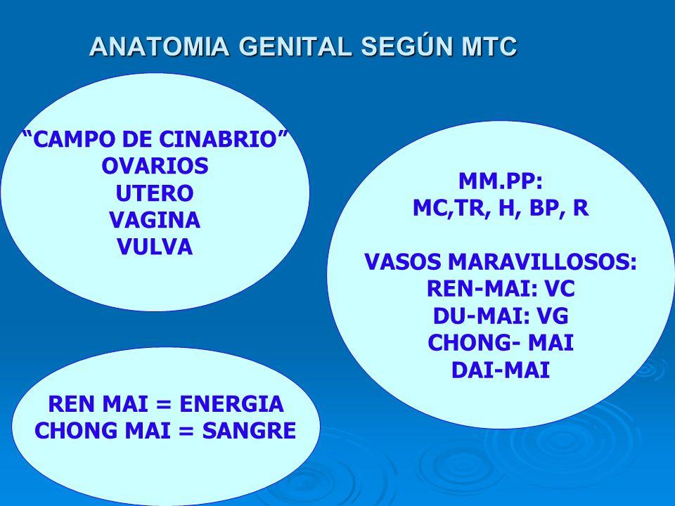ANATOMIA GENITAL SEGÚN MTC CAMPO DE CINABRIO OVARIOS UTERO VAGINA VULVA MM.PP: MC,TR, H, BP, R VASOS MARAVILLOSOS: REN-MAI: VC DU-MAI: VG CHONG- MAI D