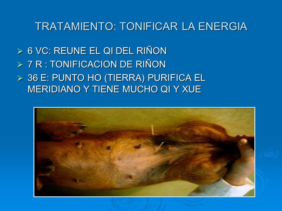 TRATAMIENTO: TONIFICAR LA ENERGIA 6 VC: REUNE EL QI DEL RIÑON 6 VC: REUNE EL QI DEL RIÑON 7 R : TONIFICACION DE RIÑON 7 R : TONIFICACION DE RIÑON 36 E