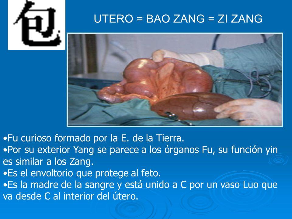 UTERO = BAO ZANG = ZI ZANG Fu curioso formado por la E. de la Tierra. Por su exterior Yang se parece a los órganos Fu, su función yin es similar a los