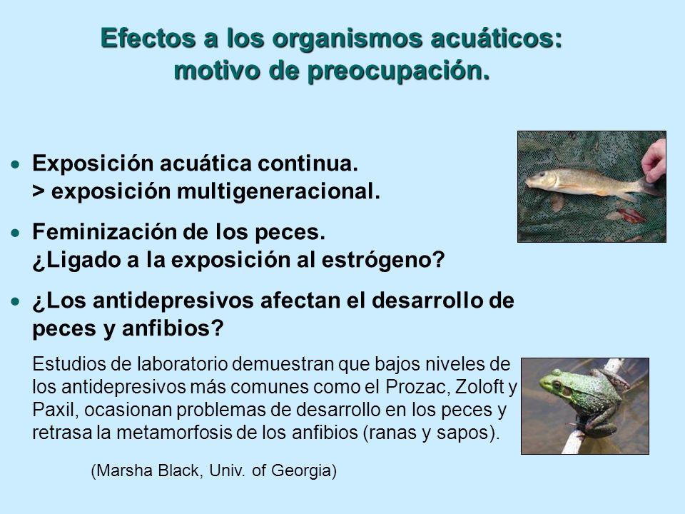Exposición acuática continua. > exposición multigeneracional. Feminización de los peces. ¿Ligado a la exposición al estrógeno? ¿Los antidepresivos afe