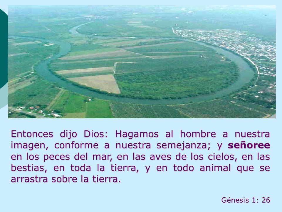 Entonces dijo Dios: Hagamos al hombre a nuestra imagen, conforme a nuestra semejanza; y señoree en los peces del mar, en las aves de los cielos, en la