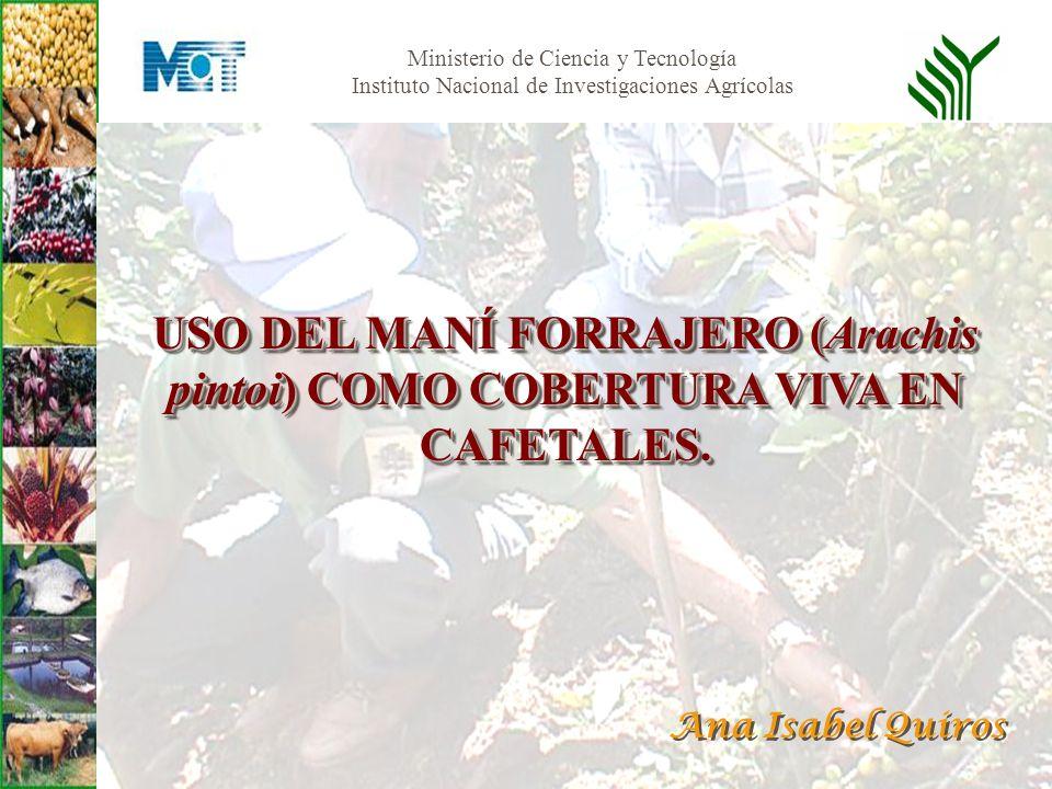 Ministerio de Ciencia y Tecnología Instituto Nacional de Investigaciones Agrícolas USO DEL MANÍ FORRAJERO (Arachis pintoi) COMO COBERTURA VIVA EN CAFE