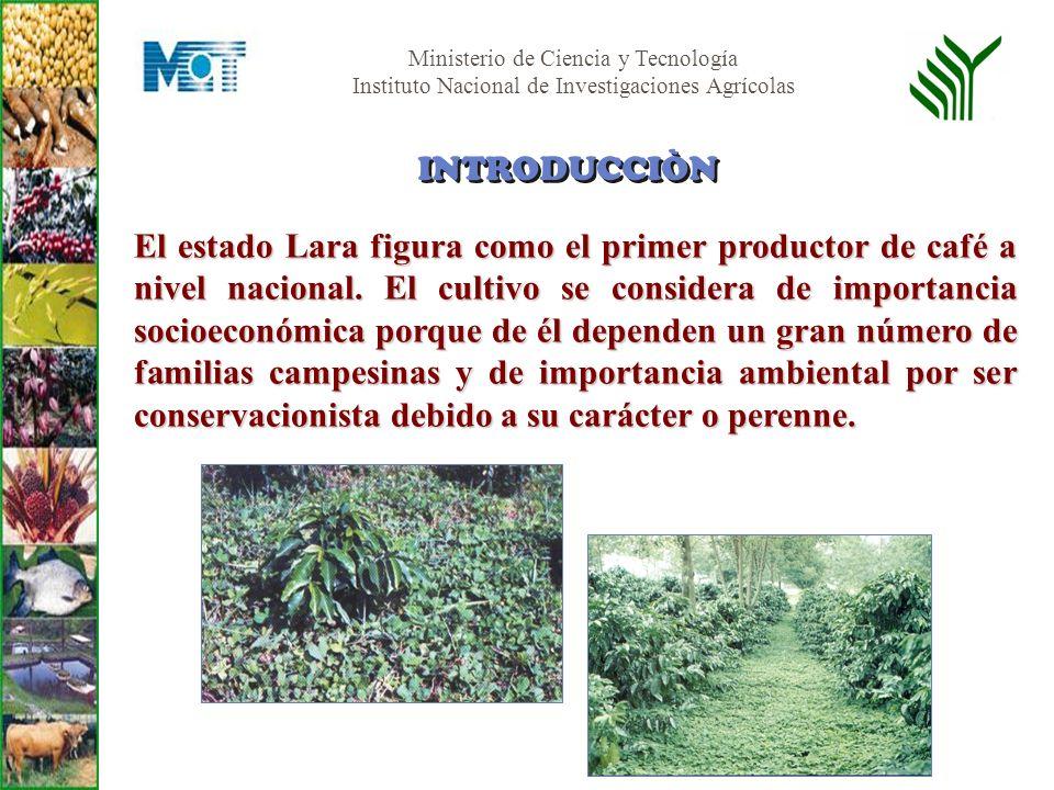 Ministerio de Ciencia y Tecnología Instituto Nacional de Investigaciones Agrícolas El estado Lara figura como el primer productor de café a nivel naci