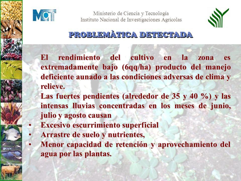 Ministerio de Ciencia y Tecnología Instituto Nacional de Investigaciones Agrícolas El rendimiento del cultivo en la zona es extremadamente bajo (6qq/h
