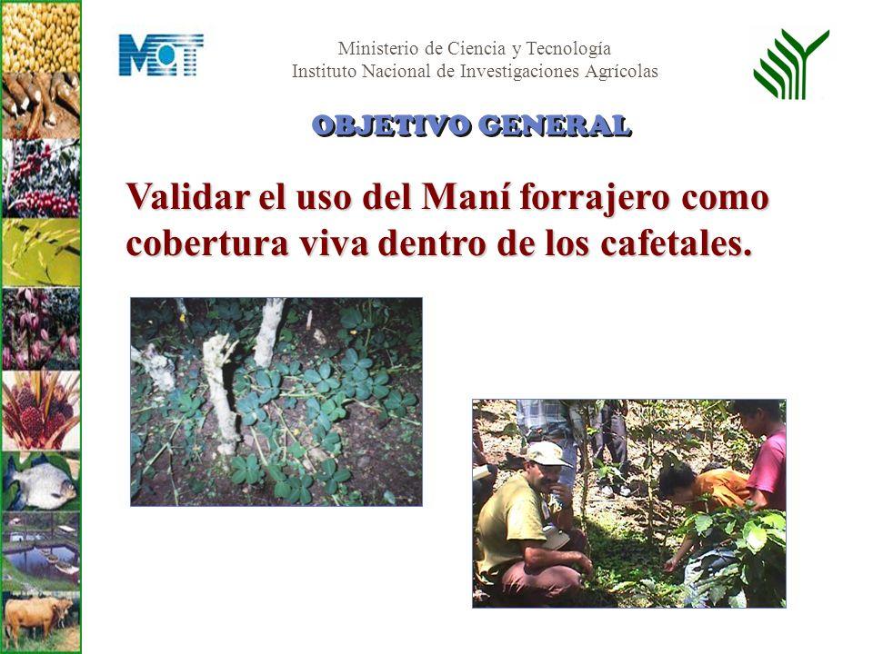 Ministerio de Ciencia y Tecnología Instituto Nacional de Investigaciones Agrícolas Ubicación Finca comercial de café con plantación establecida, en Caspo – Sanare en el Municipio Andrés Eloy Blanco del estado Lara.