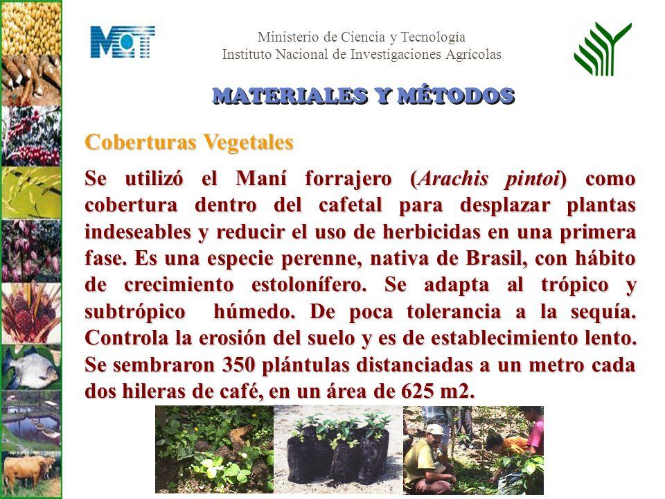Ministerio de Ciencia y Tecnología Instituto Nacional de Investigaciones Agrícolas Coberturas Vegetales Se utilizó el Maní forrajero (Arachis pintoi)