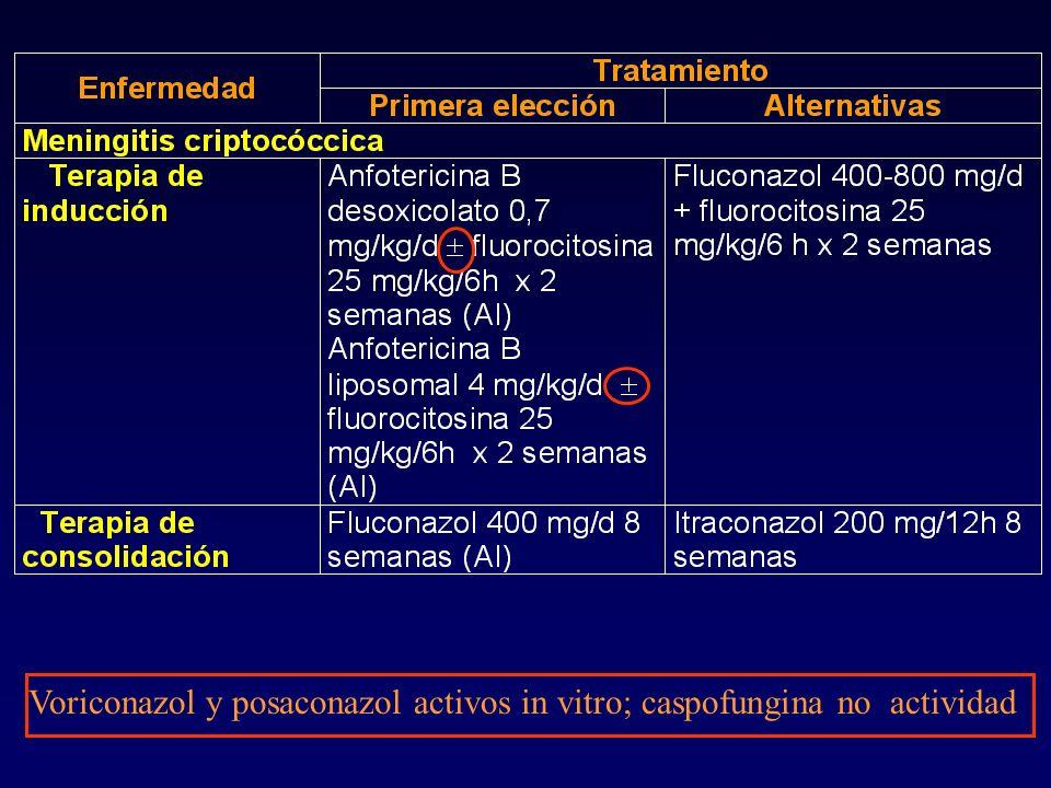 Voriconazol y posaconazol activos in vitro; caspofungina no actividad