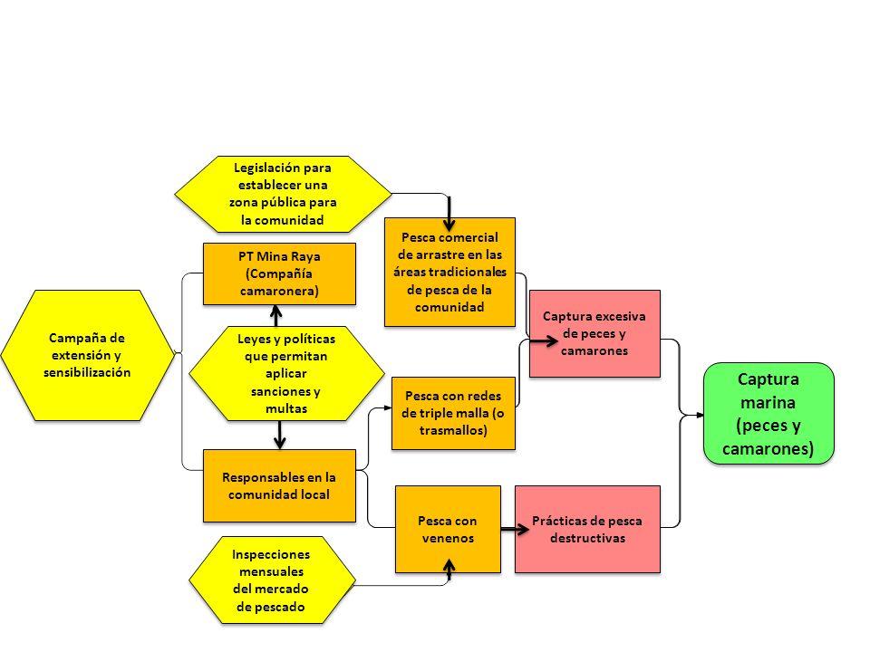 Situation Analysis Inspecciones mensuales del mercado de pescado Campaña de extensión y sensibilización Legislación para establecer una zona pública p
