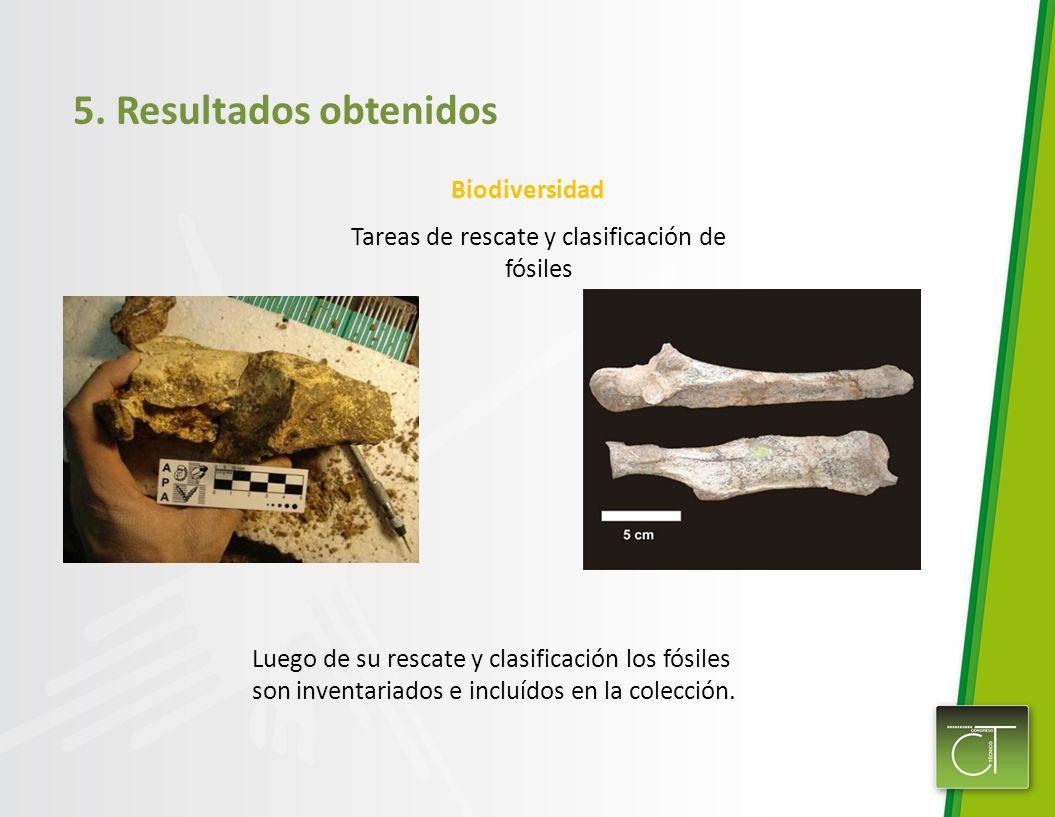 5. Resultados obtenidos Biodiversidad Tareas de rescate y clasificación de fósiles Luego de su rescate y clasificación los fósiles son inventariados e