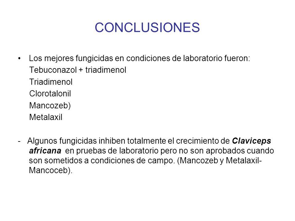 CONCLUSIONES Los mejores fungicidas en condiciones de laboratorio fueron: Tebuconazol + triadimenol Triadimenol Clorotalonil Mancozeb) Metalaxil - Algunos fungicidas inhiben totalmente el crecimiento de Claviceps africana en pruebas de laboratorio pero no son aprobados cuando son sometidos a condiciones de campo.