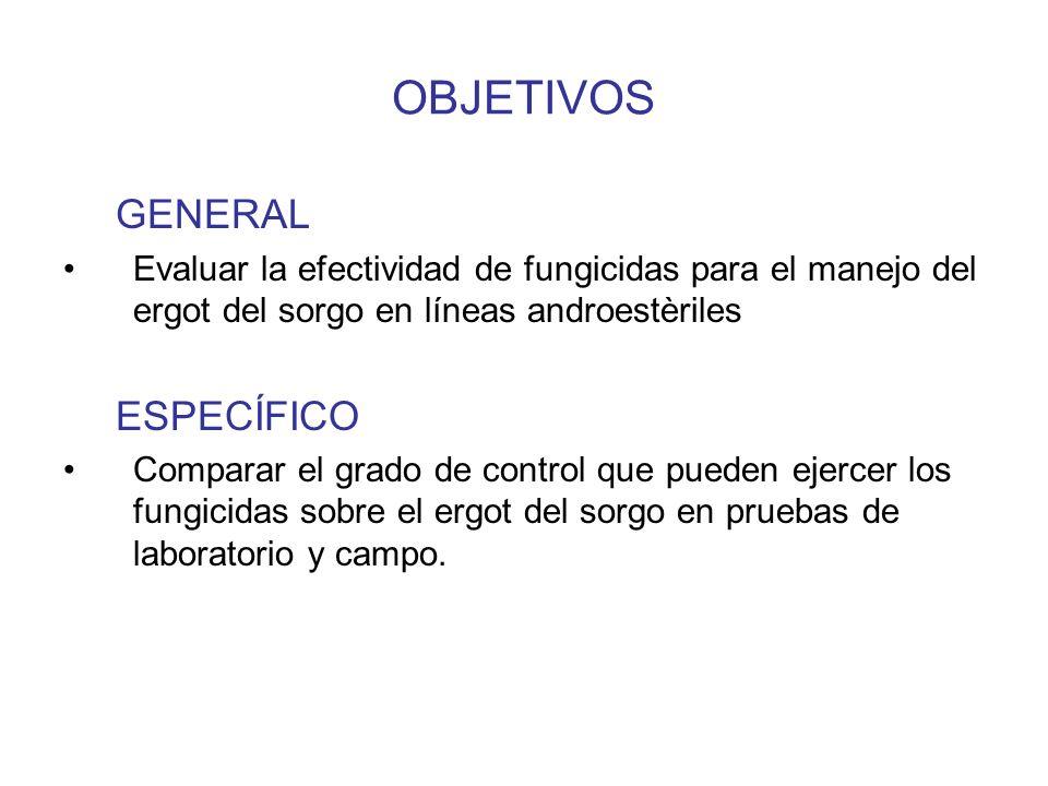 MATERIALES Y METODOS Laboratorio Aislamiento Reproducción de Ergot Sorgo usado Como substrato