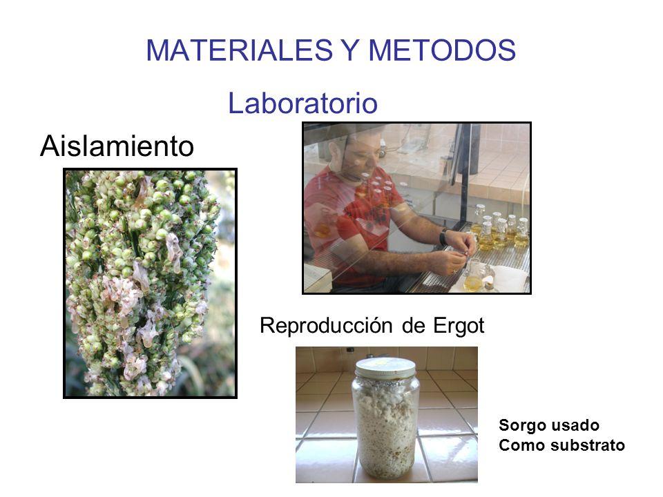 MATERIALES Y METODOS Selección de fungicidas Tebuconazol + triadimenol Triadimenol Clorotalonil Mancozeb Tiofanato Metilico Propamocarb Metalaxil-Mancoceb