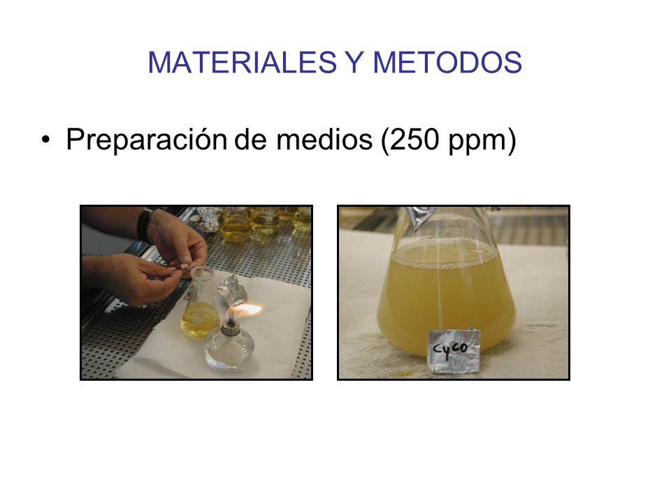 MATERIALES Y METODOS Pruebas de efectividad en lab. Claviceps africana