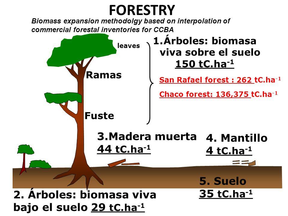 FORESTRY 1.Árboles: biomasa viva sobre el suelo 150 tC.ha -1 leaves Ramas Fuste 2. Árboles: biomasa viva bajo el suelo 29 tC.ha -1 3.Madera muerta 44