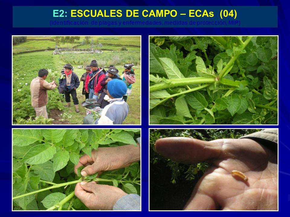 E2: ESCUALES DE CAMPO – ECAs (04) (Identificación de plagas y enfermedades, medidas de protección, MIP)