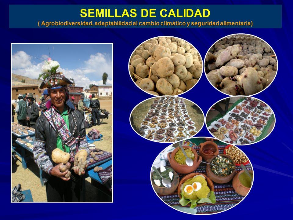 SEMILLAS DE CALIDAD ( Agrobiodiversidad, adaptabilidad al cambio climático y seguridad alimentaria)