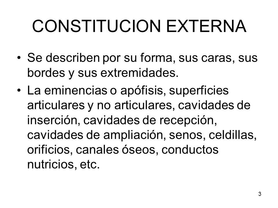 3 CONSTITUCION EXTERNA Se describen por su forma, sus caras, sus bordes y sus extremidades. La eminencias o apófisis, superficies articulares y no art