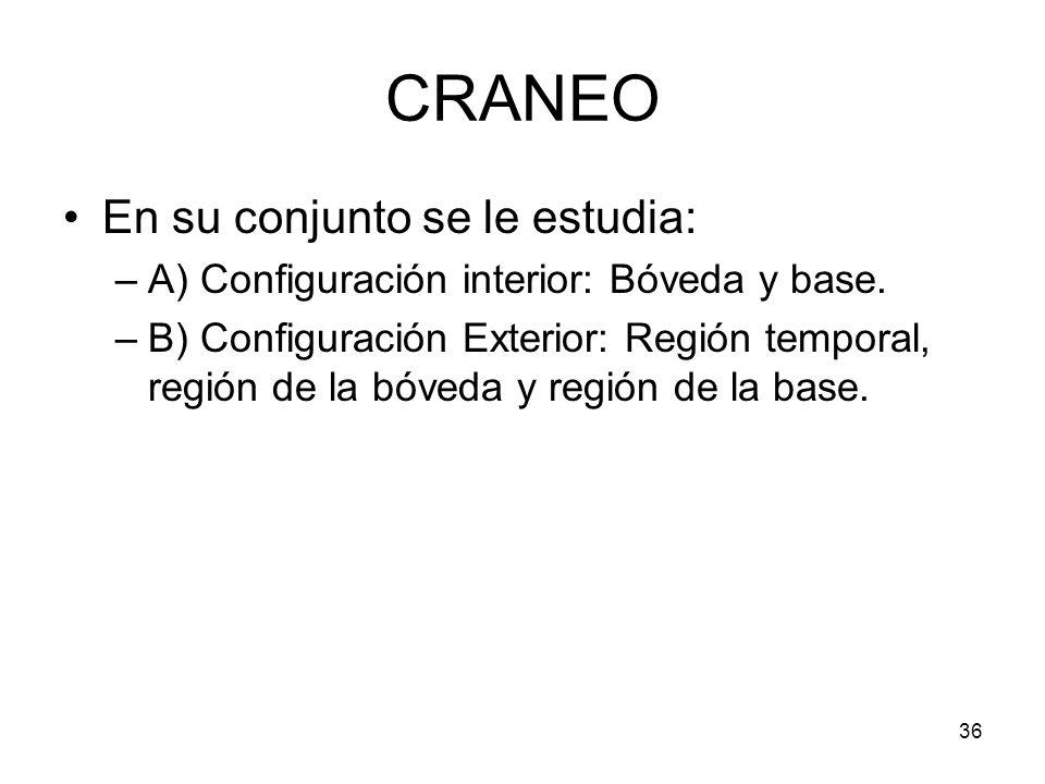 36 CRANEO En su conjunto se le estudia: –A) Configuración interior: Bóveda y base. –B) Configuración Exterior: Región temporal, región de la bóveda y