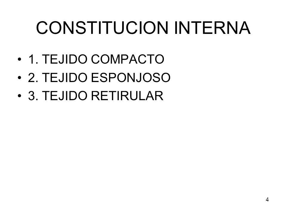 4 CONSTITUCION INTERNA 1. TEJIDO COMPACTO 2. TEJIDO ESPONJOSO 3. TEJIDO RETIRULAR