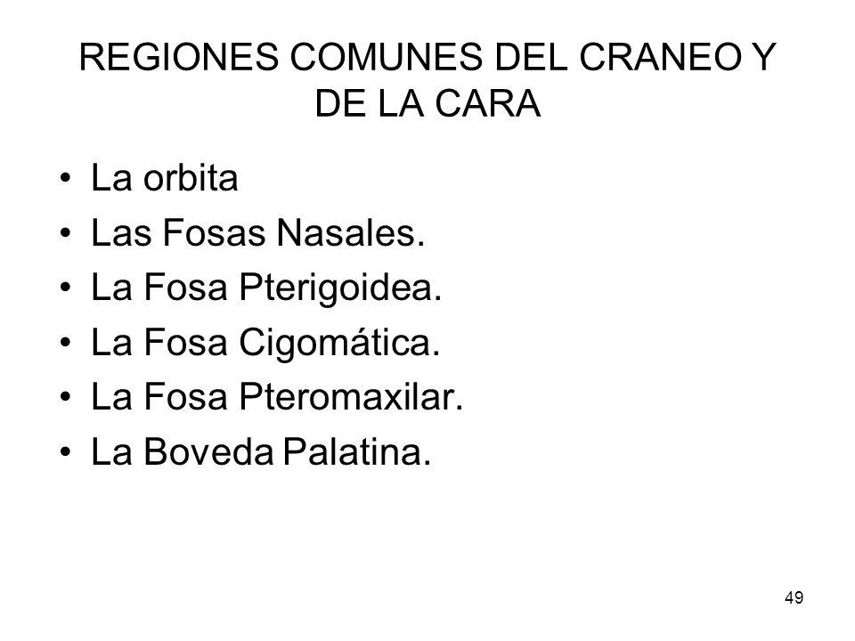 49 REGIONES COMUNES DEL CRANEO Y DE LA CARA La orbita Las Fosas Nasales. La Fosa Pterigoidea. La Fosa Cigomática. La Fosa Pteromaxilar. La Boveda Pala