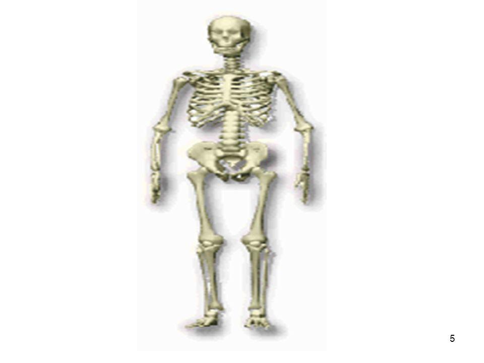 26 TORAX Es una cavidad ósea y cartilaginosa.Aloja los pulmones y el corazón.