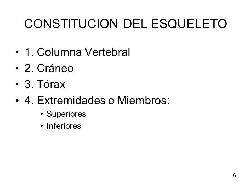 6 CONSTITUCION DEL ESQUELETO 1. Columna Vertebral 2. Cráneo 3. Tórax 4. Extremidades o Miembros: Superiores Inferiores