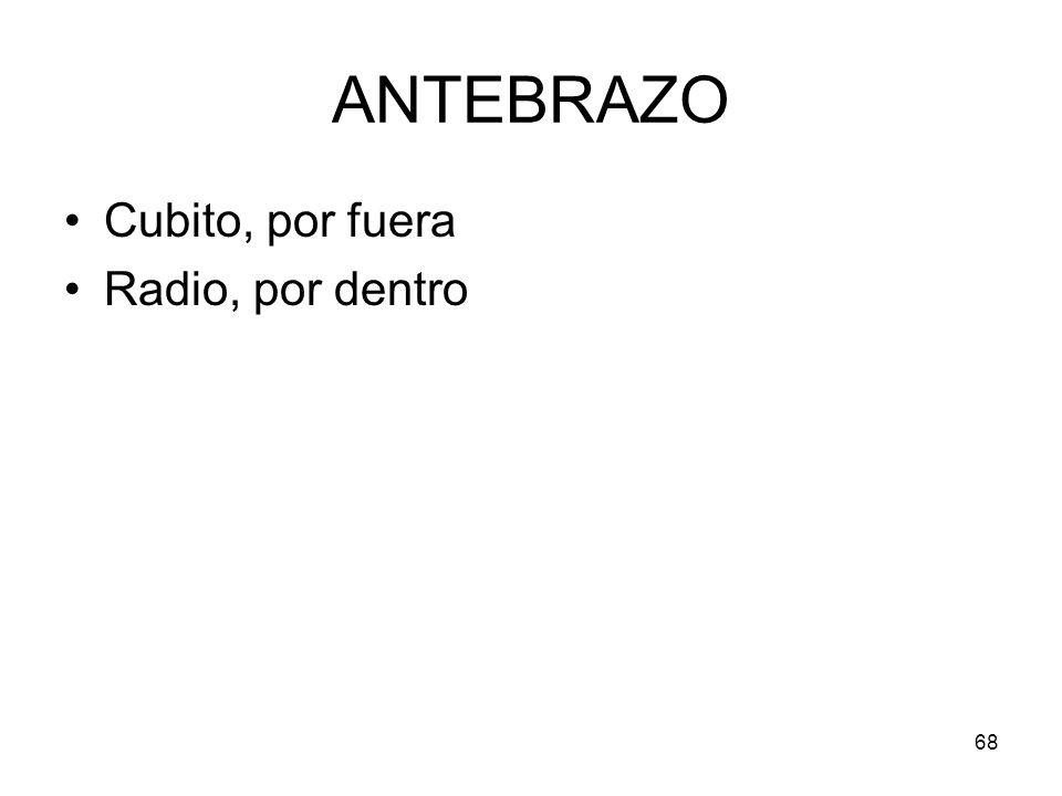68 ANTEBRAZO Cubito, por fuera Radio, por dentro