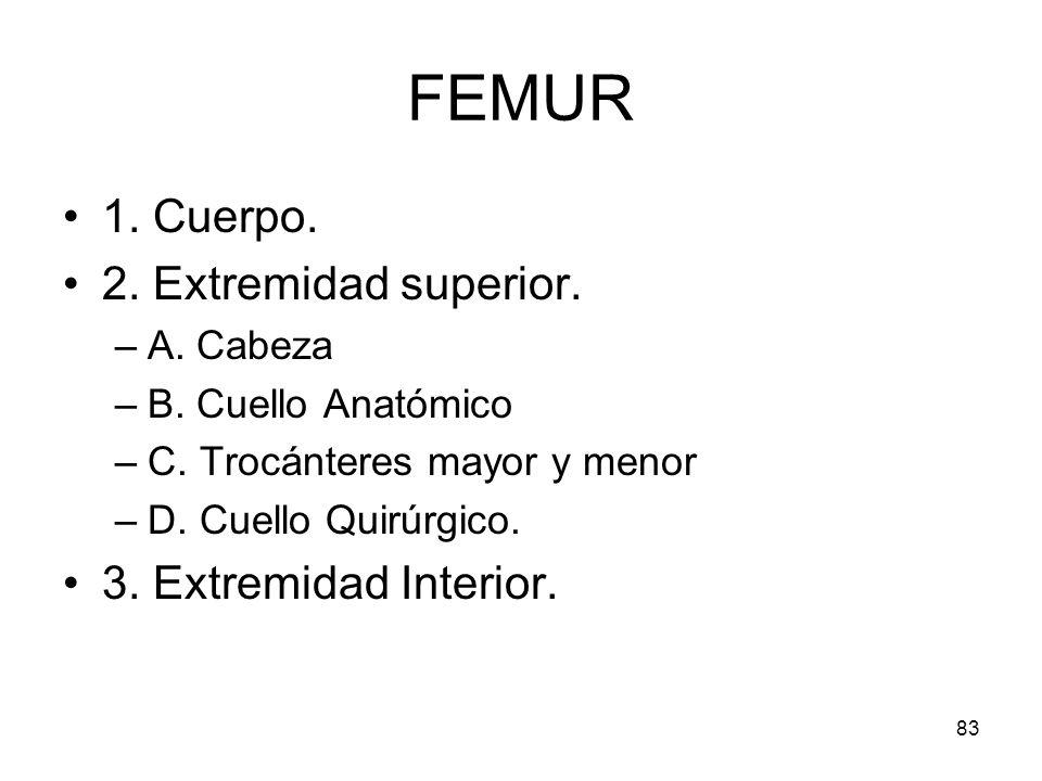 83 FEMUR 1. Cuerpo. 2. Extremidad superior. –A. Cabeza –B. Cuello Anatómico –C. Trocánteres mayor y menor –D. Cuello Quirúrgico. 3. Extremidad Interio