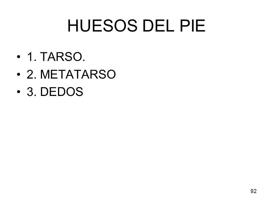 92 HUESOS DEL PIE 1. TARSO. 2. METATARSO 3. DEDOS