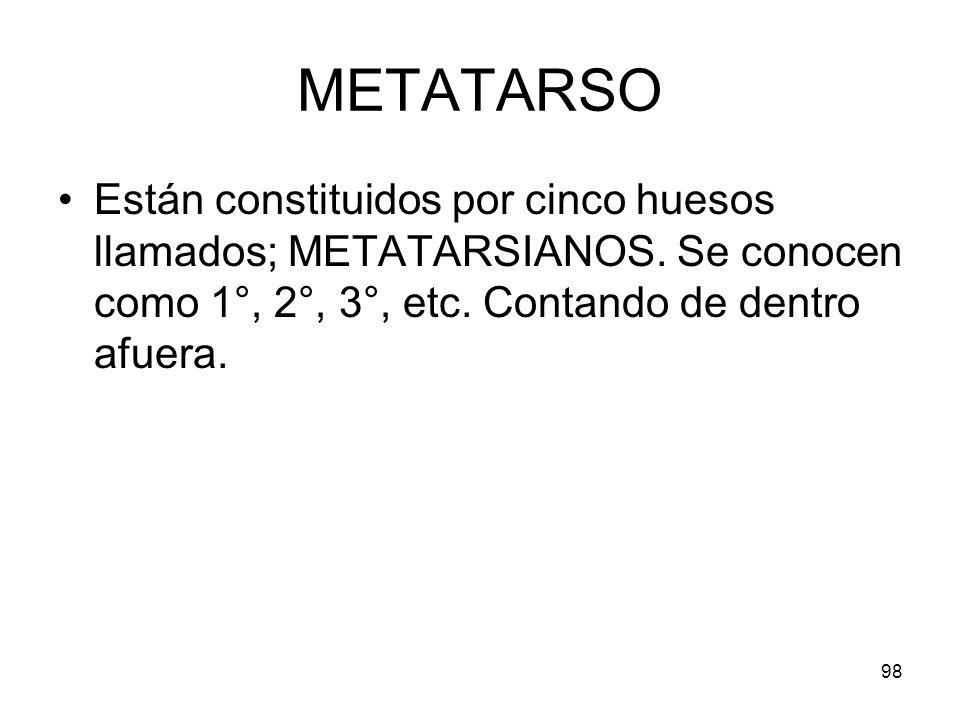 98 METATARSO Están constituidos por cinco huesos llamados; METATARSIANOS. Se conocen como 1°, 2°, 3°, etc. Contando de dentro afuera.