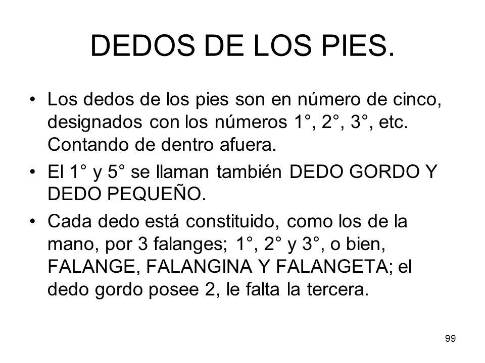 99 DEDOS DE LOS PIES. Los dedos de los pies son en número de cinco, designados con los números 1°, 2°, 3°, etc. Contando de dentro afuera. El 1° y 5°
