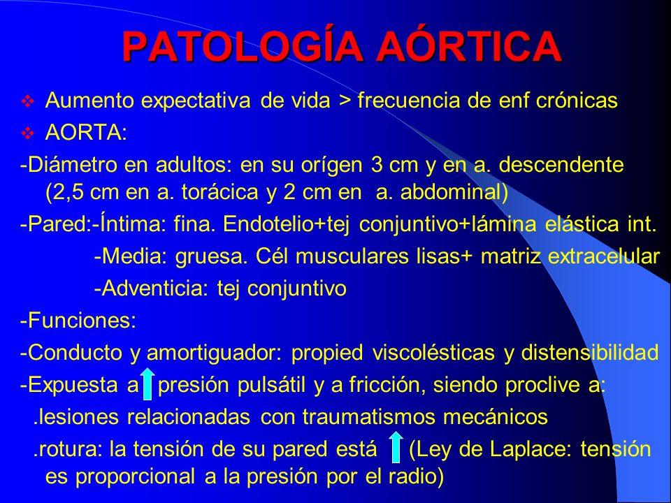 PATOLOGÍA AÓRTICA Aumento expectativa de vida > frecuencia de enf crónicas AORTA: -Diámetro en adultos: en su orígen 3 cm y en a. descendente (2,5 cm