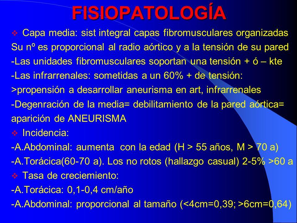 FISIOPATOLOGÍA Capa media: sist integral capas fibromusculares organizadas Su nº es proporcional al radio aórtico y a la tensión de su pared -Las unid