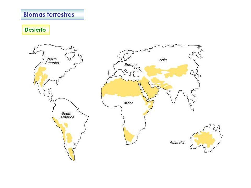 Biomas terrestres Desierto