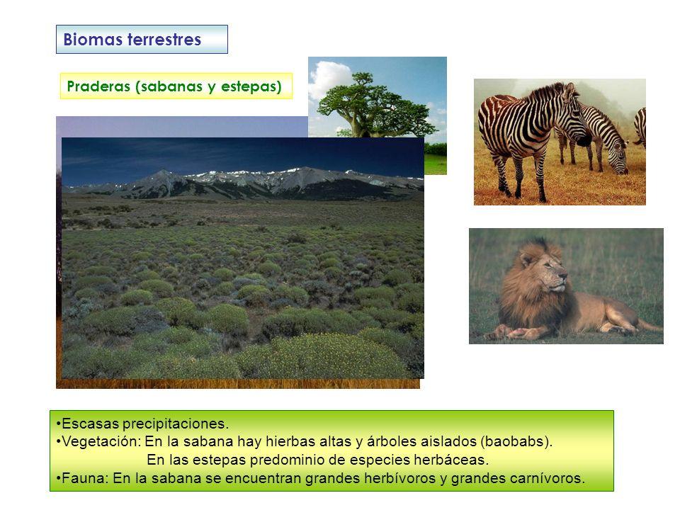 Biomas terrestres Praderas (sabanas y estepas) Escasas precipitaciones. Vegetación: En la sabana hay hierbas altas y árboles aislados (baobabs). En la