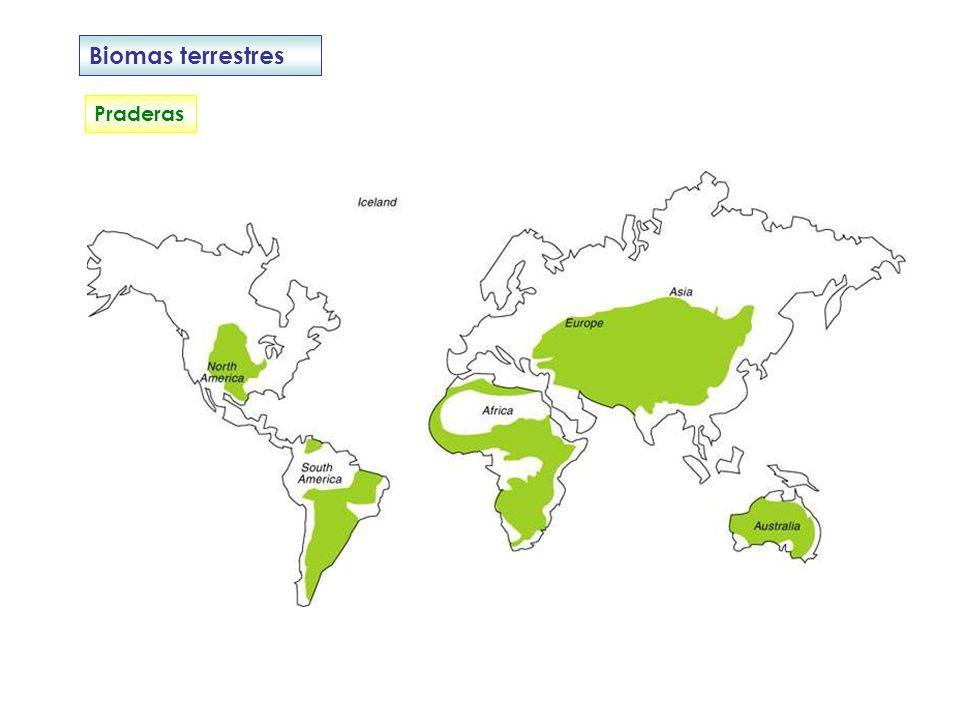 Biomas terrestres Praderas