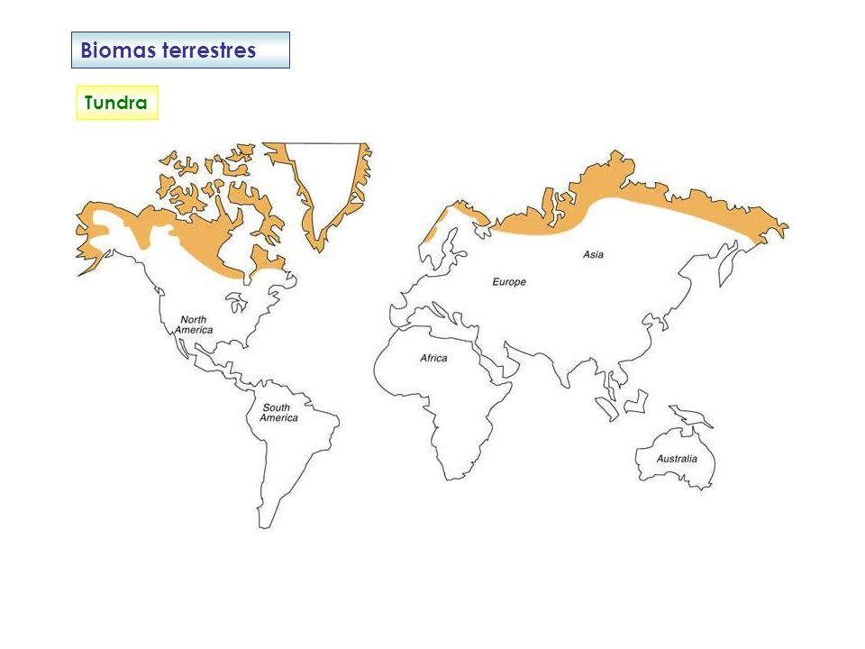 Biomas terrestres Taiga Invierno largo, de 9 o 10 meses y nieve abundante.