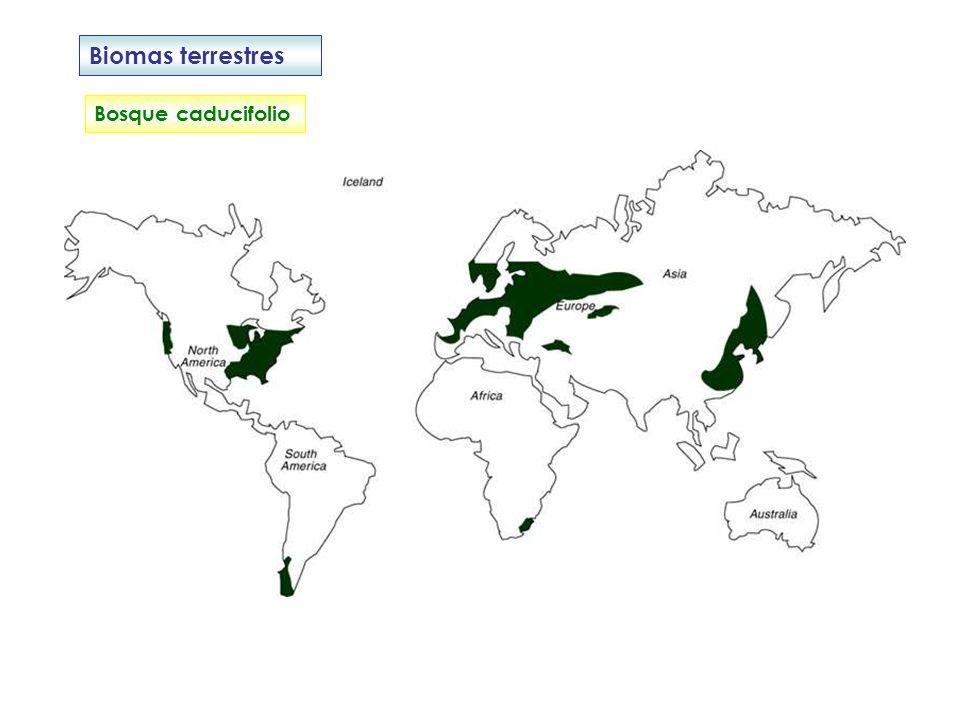 Biomas terrestres Bosque mediterráneo Período seco y cálido y con lluvias escasas.