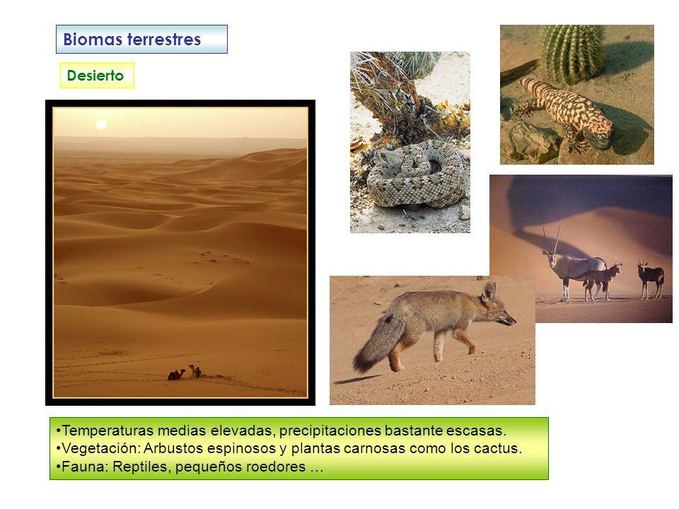 Biomas terrestres Desierto Temperaturas medias elevadas, precipitaciones bastante escasas. Vegetación: Arbustos espinosos y plantas carnosas como los