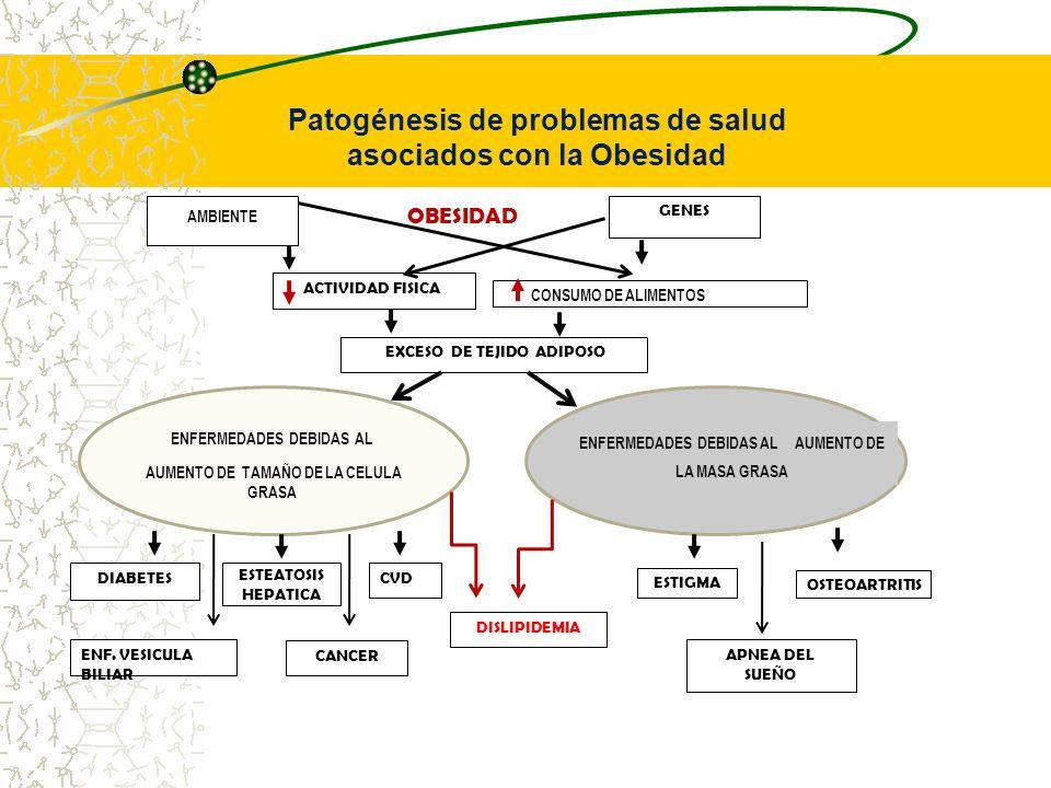 OBESIDAD AMBIENTE GENES ACTIVIDAD FISICA CONSUMO DE ALIMENTOS EXCESO DE TEJIDO ADIPOSO ENFERMEDADES DEBIDAS AL AUMENTO DE TAMAÑO DE LA CELULA GRASA EN