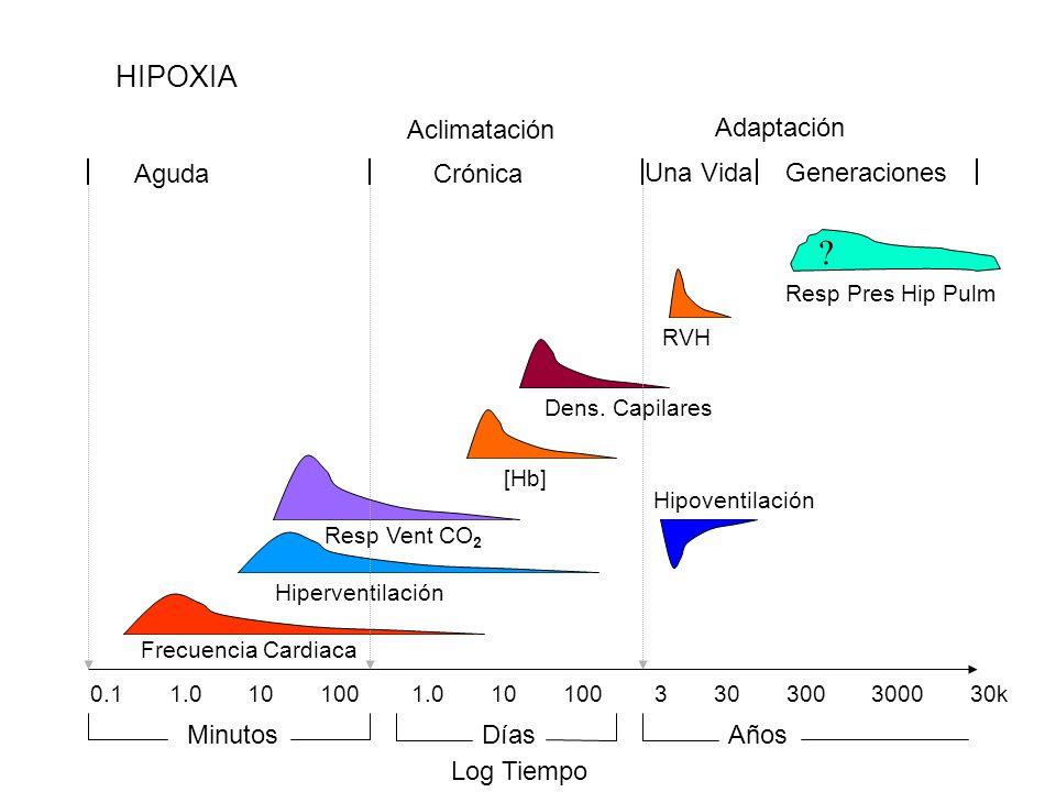 HIPOXIA Crónica Una Vida Aguda Adaptación Aclimatación Generaciones Log Tiempo 0.1 1.0 10 100 1.0 10 100 3 30 300 3000 30k MinutosDíasAños Frecuencia