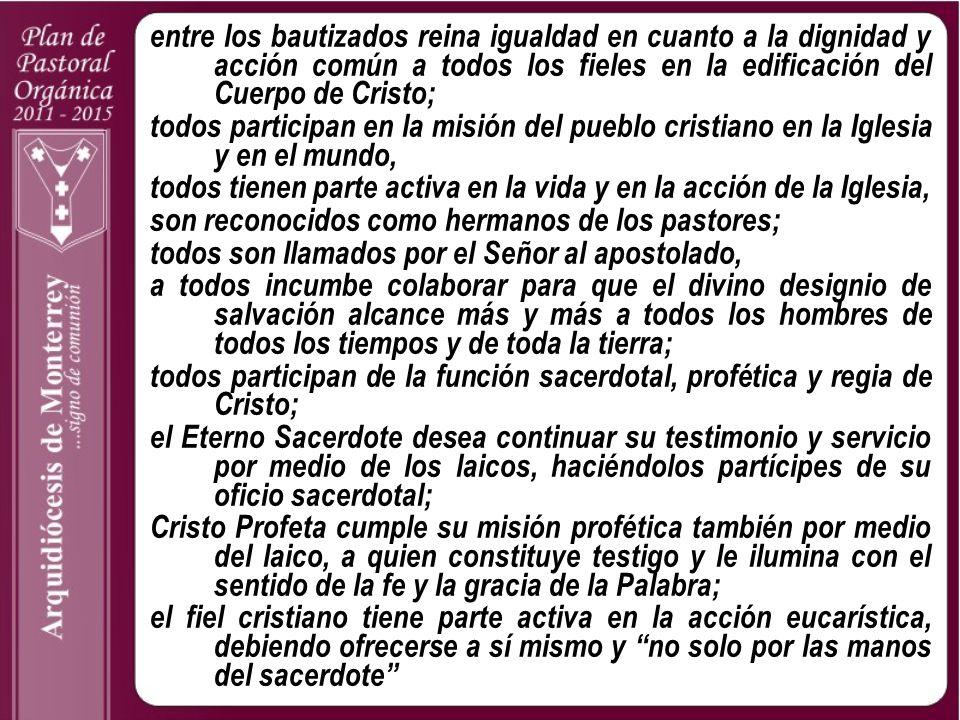 entre los bautizados reina igualdad en cuanto a la dignidad y acción común a todos los fieles en la edificación del Cuerpo de Cristo; todos participan