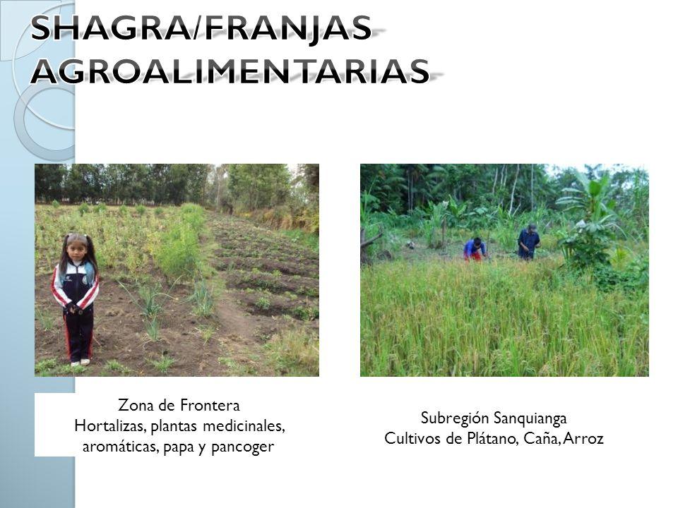 Zona de Frontera Hortalizas, plantas medicinales, aromáticas, papa y pancoger Subregión Sanquianga Cultivos de Plátano, Caña, Arroz