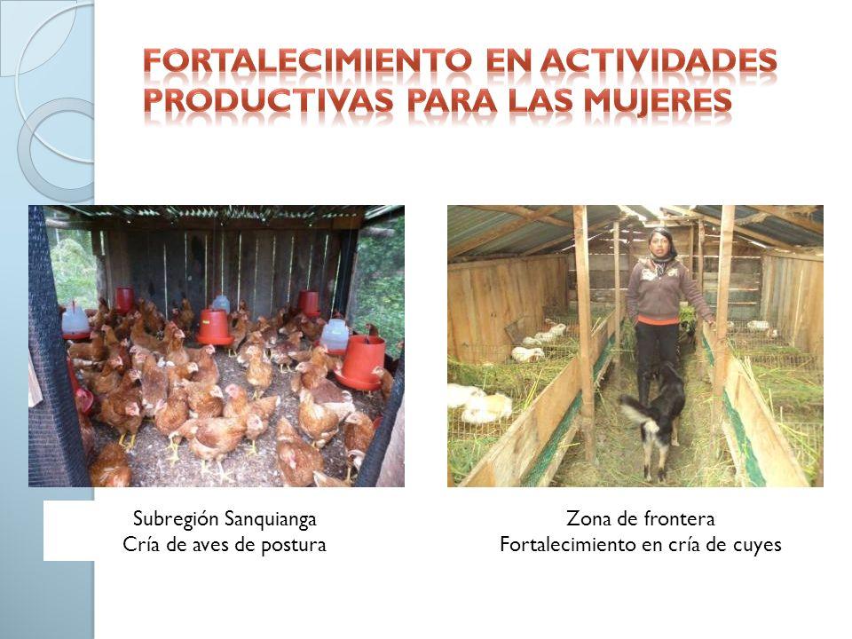 Subregión Sanquianga Cría de aves de postura Zona de frontera Fortalecimiento en cría de cuyes